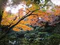 殿ヶ谷庭園 (7).JPG